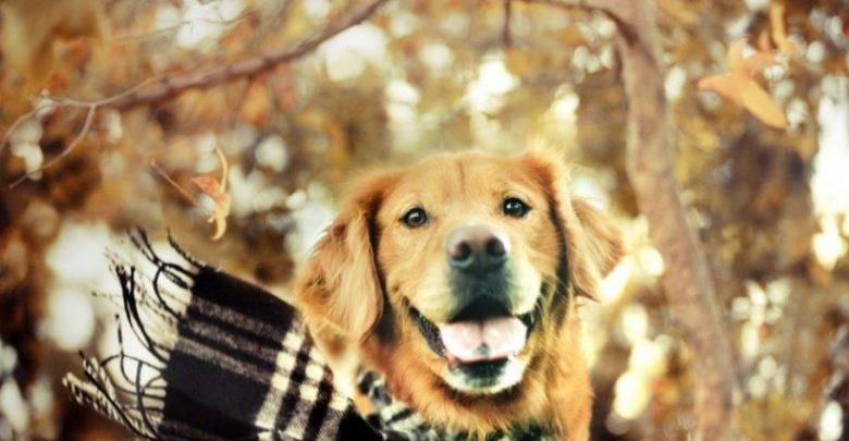Photo of Köpek Bakımı Nasıl Yapılır?