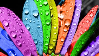 Photo of Renkler Ve Anlamları