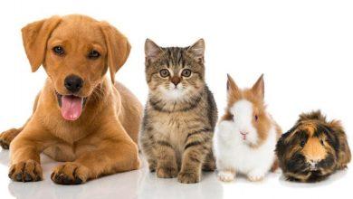 Photo of Hangi Evcil Hayvan Sizin İçin Uygun