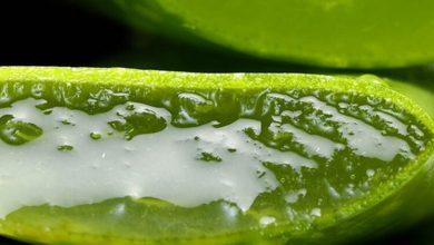 Photo of Aloe Veranın Cilde Faydaları